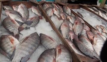 أسعار الأسماك اليوم الأثنين 16-3-2020 في الإسكندرية