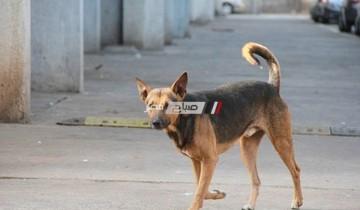 البحث عن كلب مسعور عقر  37 شخص فى منطقة العجمي بمحافظة الإسكندرية