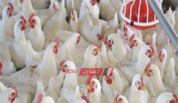 أسعار الفراخ بالكيلو بحسب تقارير بورصة الدواجن المصرية اليوم الإثنين 25 أكتوبر 2021