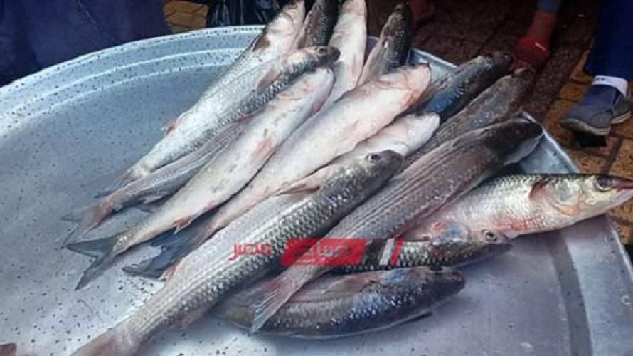 أسعار كل الانواع السمك في مصر النهاردة الإثنين