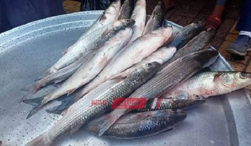 أسعار الأسماك اليوم السبت 21-3-2020 في الإسكندرية