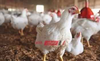أسعار الدواجن اليوم الإثنين 16-8-2021 في الأسواق المصرية