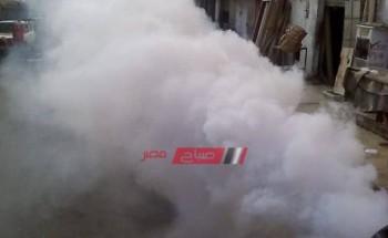 حملات مكبرة لمكافحة انتشار البعوض بعد إنتهاء النوة في الإسكندرية