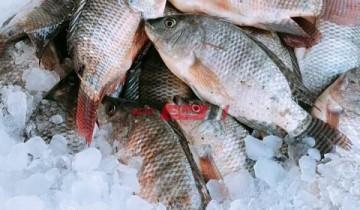 أسعار السمك اليوم الأربعاء 21-7-2021 في السوق المصري