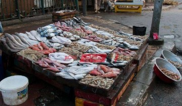 أسعار السمك بكل انواعها في مصر اليوم الأربعاء 20-10-2021
