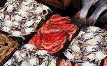 أسعار الأسماك في مصر اليوم السبت 8-5-2021