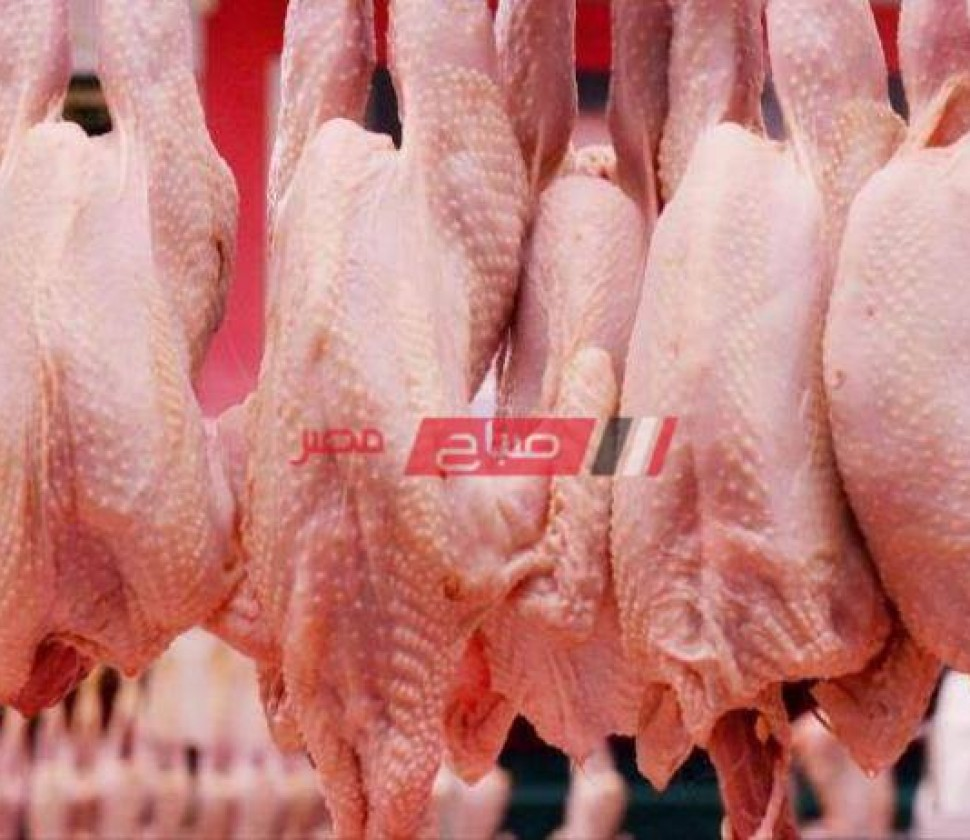 أسعار الدواجن المحدثة بكل انواعها في مصر اليوم الخميس 28-10-2021