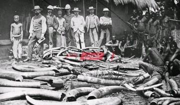 كيف تم استغلال أفريقيا في الحرب العالمية الأولى
