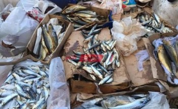 ضبط 180 كيلو اسماك فاسدة في حملة مكبرة على أسواق دمياط الجديدة