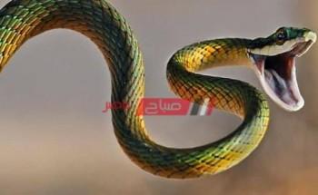 تفسير حلم الثعبان في المنام لابن سيرين والنابلسي