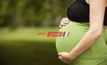 تفسير حلم رؤية الحمل في المنام لابن سيرين