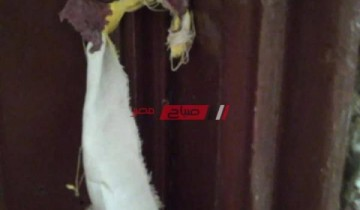 غلق و تشميع عدد من مراكز الدروس الخصوصية بمحافظة بورسعيد