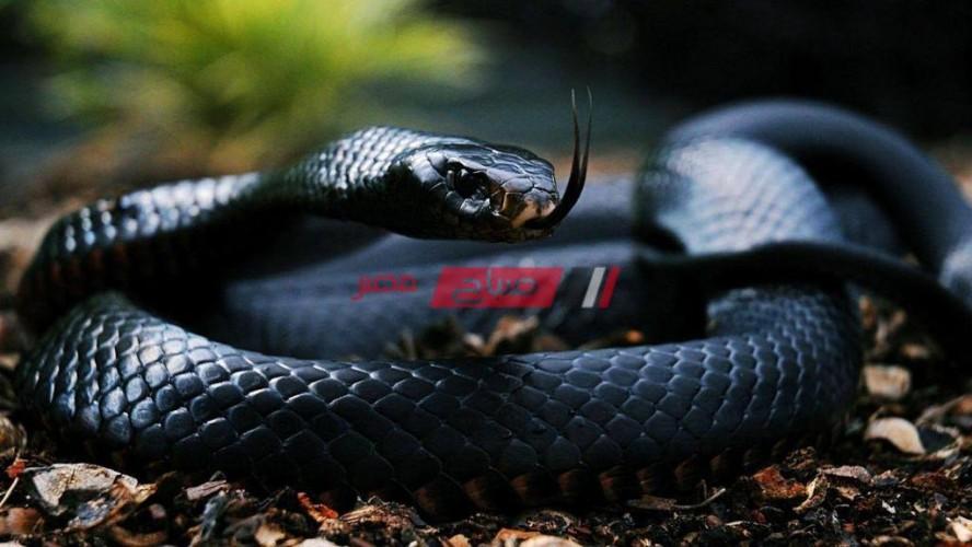 تفسير رؤية الثعبان الأسود في المنام