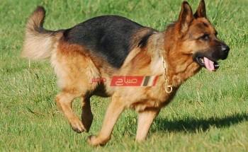 تفسير رؤية مطاردة الكلاب في المنام