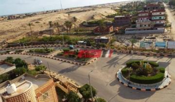 مجلس مدينة كفر الشيخ شن حملة لمتابعة عملية رفع نواتج التطهير وتقليم الأشجار
