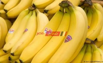 فوائد الموز وأهميته في حياتنا اليومية
