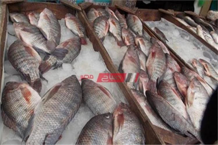 سعر كيلو السمك في مصر اليوم الخميس 14-10-2021