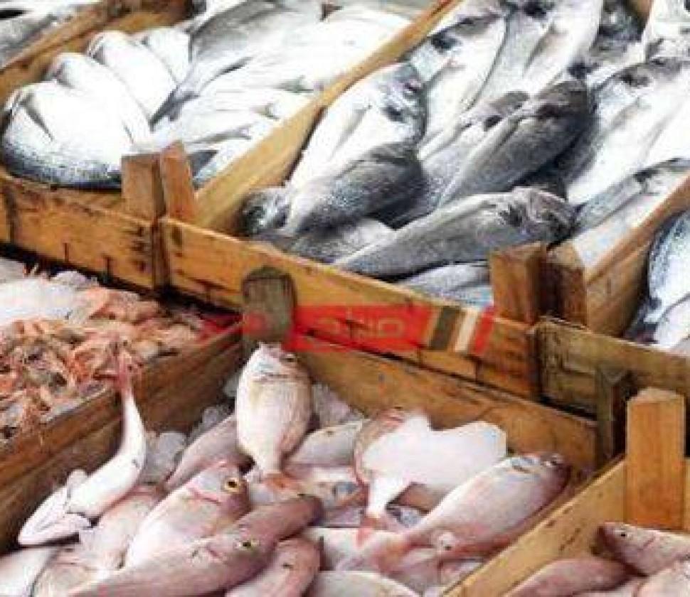 أسعارالسمك لكل الأنواع اليوم الثلاثاء 26-10-2021 في مصر