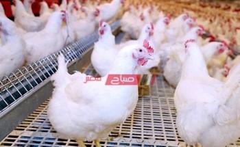 أحدث أسعار الدواجن والبيض في السوق المصري اليوم الخميس 25-2-2021