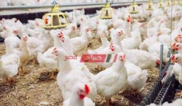 أسعار الدواجن لكل الانواع في السوق المصري اليوم الثلاثاء 26-10-2021