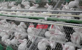 متوسط سعر اليوم لكل انواع الأرانب 20-9-2021 بالاسواق المحلية