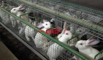 أسعار الأرانب في السوق المحلي اليوم الإثنين 3-5-2021