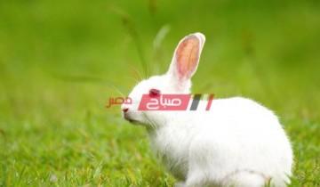 متوسط سعر كيلو الأرانب المحدثة الأربعاء 29-9-2021 بأسواق مصر