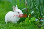 أسعار الأرانب اليوم الخميس 15-4-2021 في السوق المصري