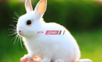 اسعار الأرانب اليوم الاحد 26 من سبتمبر 2021