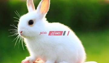 أسعار الأرانب اليوم الأحد 25-7-2021 في مصر