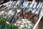 أسعار السمك اليوم الأربعاء 16-6-2021 في السوق المصري