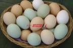 تفاصيل أسعار البيض بالسوق المحلي اليوم الخميس 28-10-2021