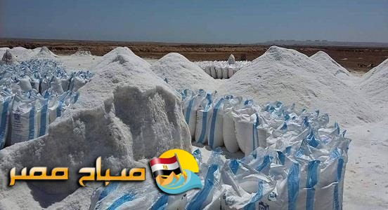 القبض على صاحب مصنع يروج ملح فاسد للمواطنين بالقليوبية