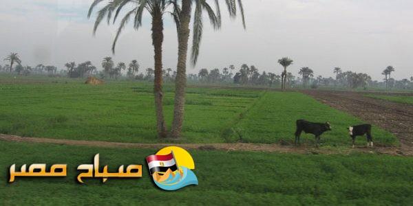 شن حملة مكبرة لإزالة 10 حالات تعدى على الأرض الزراعية بإجمالي 2007 متر بدمياط