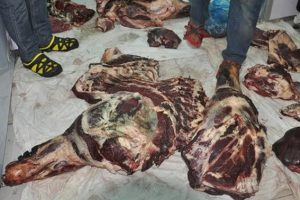 ضبط مصنع لتدوير اللحوم الفاسدة فى القليوبية