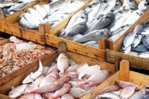 اسعار الاسماك فى اسواق محافظة البحيرة اليوم السبت