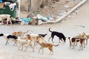 شن حملة مكبرة للقضاء على الكلاب الضالة بحى وسط بالإسكندرية