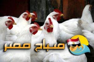 اسعار الدواجن والبيض فى اسواق الشرقية اليوم الاحد
