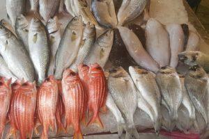 أسعار الأسماك اليوم الخميس 10-1-2019 بمحافظة الاسكندرية
