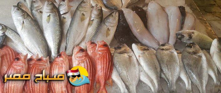 أسعار الأسماك اليوم الأربعاء 24-4-2019 بالإسكندرية