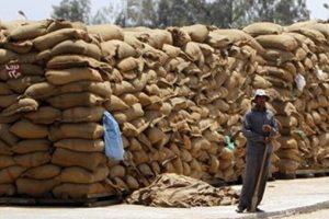 """""""زراعة الشرقية"""" : إجمالي كمية القمح الموردة للشون، 493 ألف طن"""