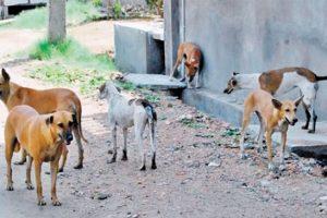 التخلص من 20 كلبًا ضالاً بالقليوبية بعد حادثة عقر 5 أشخاص