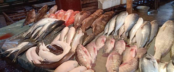 أسعار كل أنواع الأسماك بمحافظات مصر اليوم الثلاثاء 19-11-2019