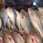 أسعار الأسماك اليوم الاثنين 18-11-2019 بمحافظة الإسكندرية