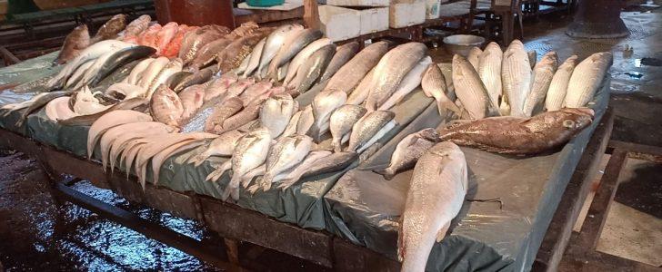 أسعار الأسماك اليوم الأحد 13-1-2019 بالإسكندرية
