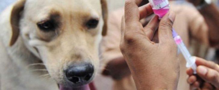 بيطرى دمياط: شن حملات مكبرة للقضاء على الكلاب الضالة المنتشرة في الشوارع