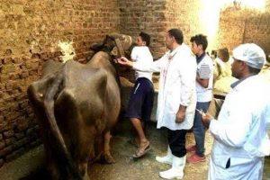 فحص 140 رأس ماشية ودواجن ضمن فعاليات القافلة العلاجية بدمياط