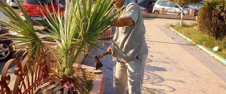 إستكمال أعمال خطة رفع كفاءة الحدائق ورفع التجمعات والقمامة بجميع أحياء بورسعيد