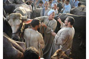 بعد تكرار شكاوى الاهالى غلق سوق للمواشي ونقله إلى سوق محافظة اسيوط ابتداءًا من غدًا
