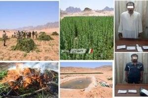 ضبط 5 قطع أسلحة نارية و12 قيراط منزرعة بنبات البانجو المخدر بأسيوط